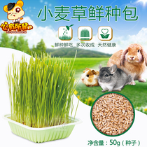 HR. Mr. MAY grass wheat grass fresh seed bag 50g