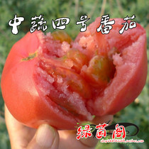 Pulp large Tomato Seed Vegetables No. Fourth Terrace potted fruit and vegetable spring-sowing old varieties tomato vegetable seeds