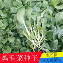 Thousand vegetables Hundred Flowers jade green excellent chicken feather vegetable seed small rapeseed green cabbage Four Seasons broadcast balcony vegetables