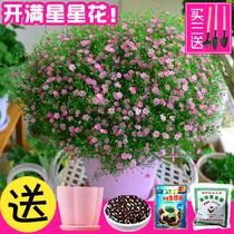 Flowers and plants flower flower garden flowers flowers in four seasons species easy live flowering