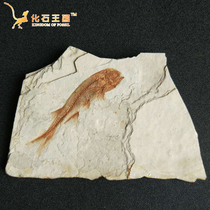 Special liaoxi paleontological fossils Wolf fin fish fossils specimens original plate ornamental stone ornaments animal fossils