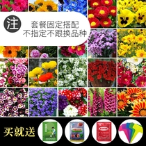 Flower SEED package Four Seasons easy living indoor balcony potted flowering continuous when Diy plant garden flower Seeds
