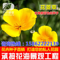 Flower ling grass flowers and plants seed cold seasons sowing garden flower sea landscape flowering plant seeds