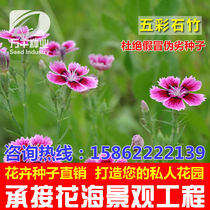 Flowers perennial flower grass seeds Four Seasons planting garden flower sea landscape flowering plant seeds