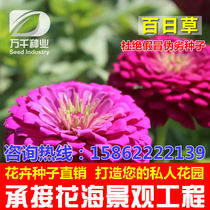 Hundred Days grass hundred flower seed seeds of the Four Seasons easy sowing live courtyard villas flower sea landscape flowering plant seeds