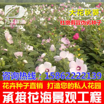 Floral okra Perennial flowers flowers seeds Four Seasons garden flowers sea landscape flowering plant seeds