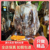 Myanmar tree jade ornaments De Bai Bing species of wood fossil silicified wood rough living room viewing stone patron stone