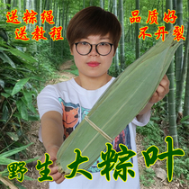 New goods dry 糉 leaves dry brown leaves wide 糉 leaf large糉 leaves 100 pieces of 糉 a large number of concessions