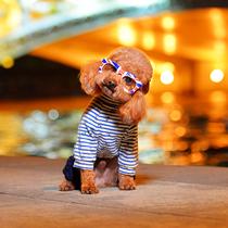 (Budding pet photography) Tianjin Pet Photography professional pet photo Cat dog animal photo exclusive night View