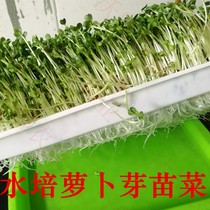 Sprout seedling vegetable seeds red fruit radish bean sprouts machine balcony vegetable radish seed bud rapeseed yield high