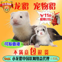 Pet Mink Ferret Small Rong Ma Ferret animal living Sky Demon Mink