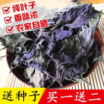 Fresh wild Purple leaf dry farm Sioux leaves tea bath to fishy fresh edible spices without coarse stem to send seeds
