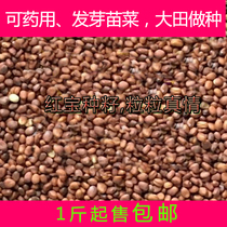 Bulk White radish Raihani 60 days radish seeds radish seed bulk Early radish full 1 Jin