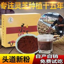 (self-produced) non-Changbai mountain Ganoderma lucidum spore powder Ganoderma lucidum powder Linzhi powder 500g bulk Longquan tou DAO powder